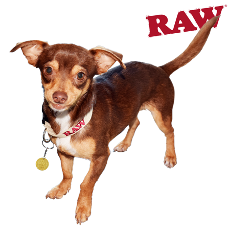 RAW Hemp Pet Collar